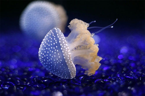 A Little Bit Blue Underwater Photography Examples