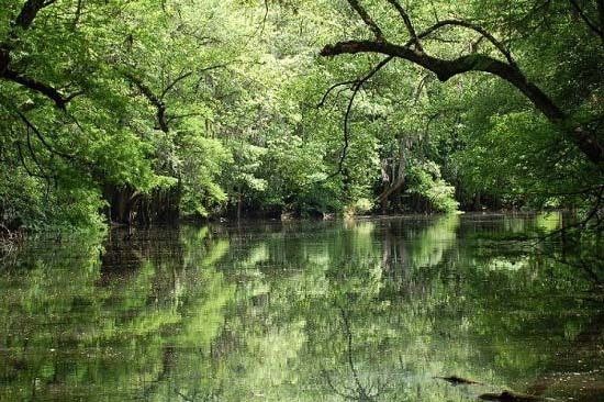 Congaree National Park in South Carolina