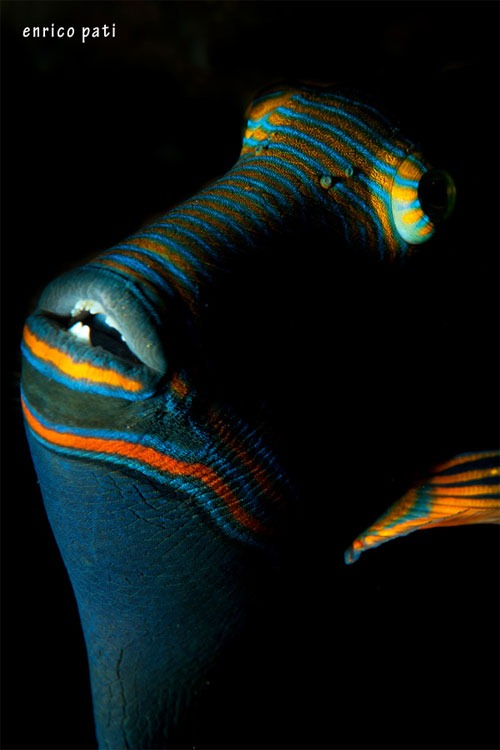 DSC 8742-By-fabbricamare Wonders of Underwater Photography Examples