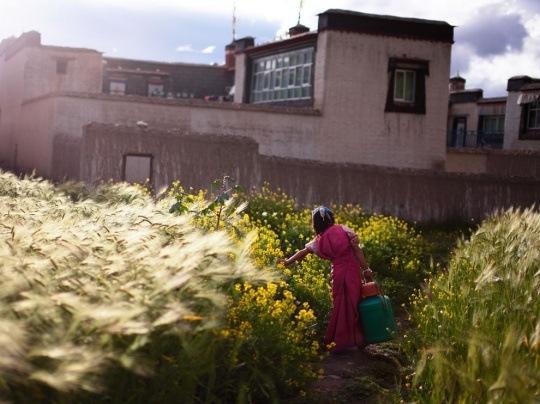 Girl With Pail, Tibet by Li Fan