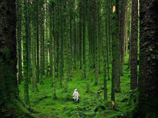 Hiker, Scottish Highlands by Luis del Río