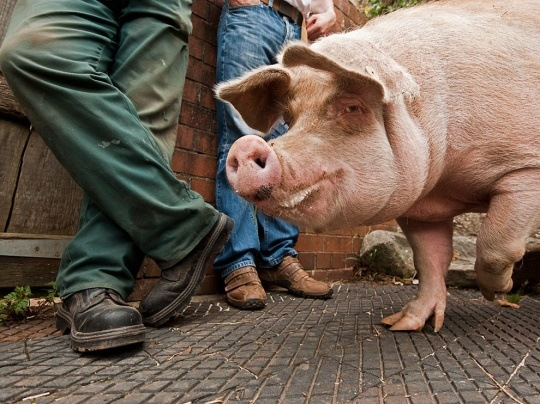 Welsh Pig, Cardiff by Jim Richardson