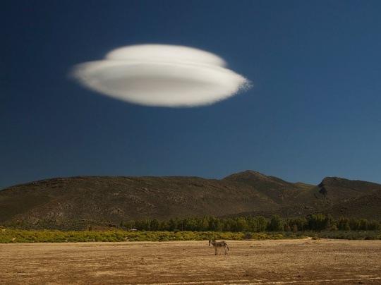 Zebra and Cloud, South Africa by Dmitry Gorilovskiy
