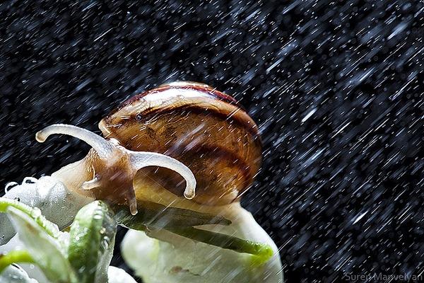 weather survivor Macro Photography