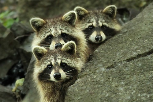 tres banditos