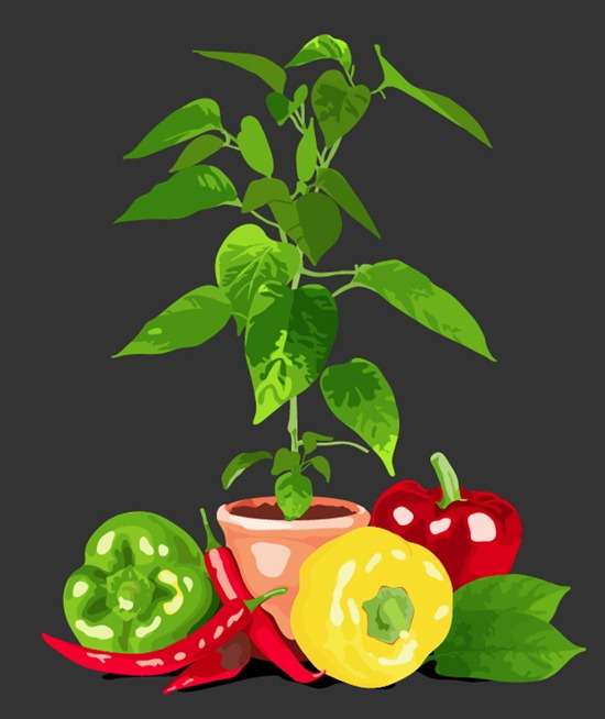 Create a Graphic Still Life with Image Trace and the Blob Brush Tool