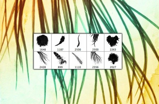 Feathers Photoshop Brush Set