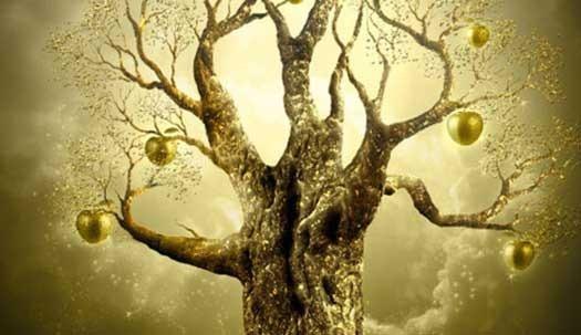 Golden-Apple-Tree