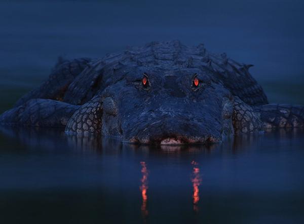 Warning night light