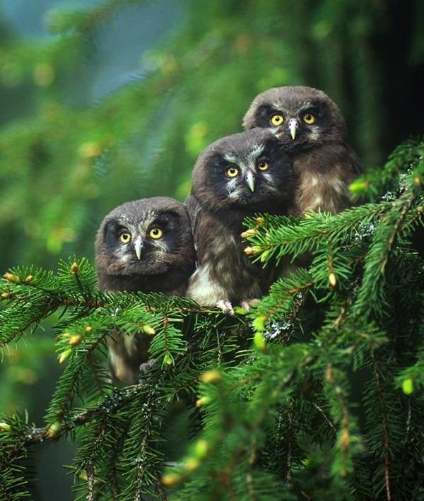 black-owl-fire-tree