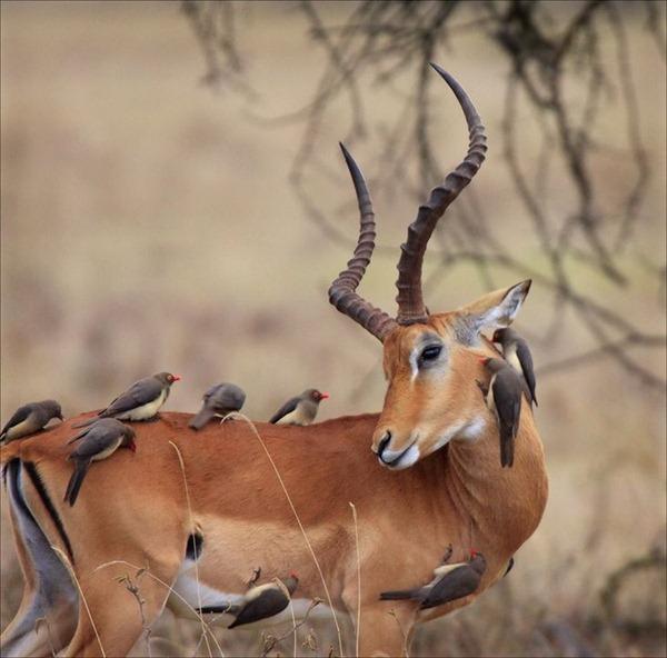 deer-in-wild