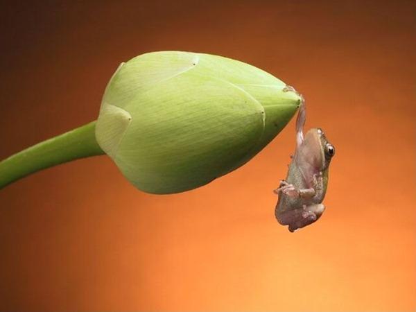 hanging-frog-wild-beauty