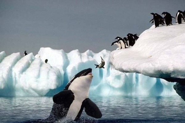 penguin-snow-shark