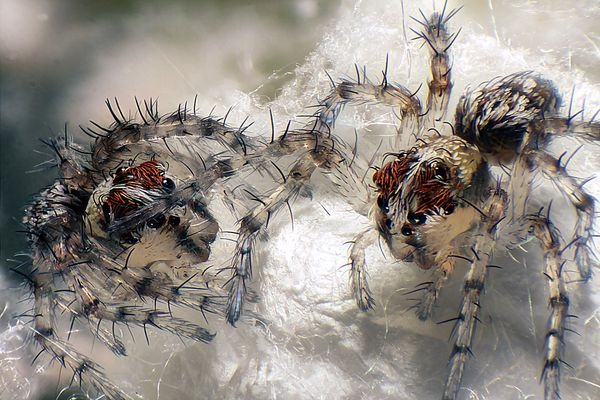 spiders-macro-world-2012