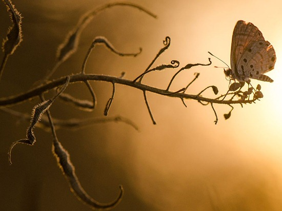 butterfly-branch-macro-photo-of-the-day-natgeo