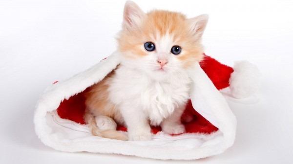 kitten-in-hat-christmas