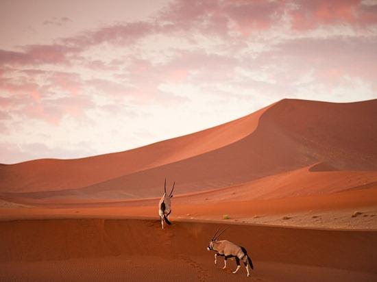 oryx-dunes-namibia