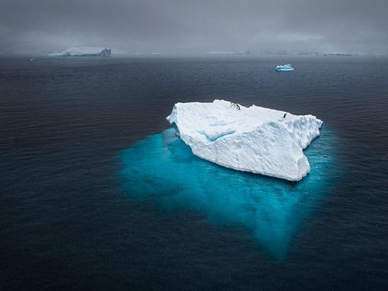 penguins-icebeg-antarctica-photo-of-the-day-natgeo