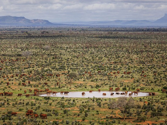 red-elephants-stirton-photo-of-the-day-natgeo