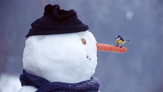 sparrow-on-Snowman-nose
