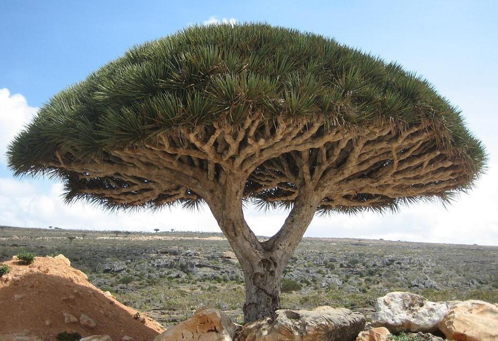 Socotra-Image-2.jpg