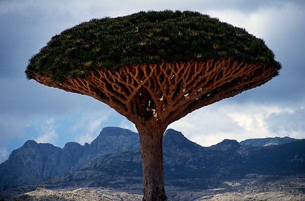 Socotra-Image-3.jpg