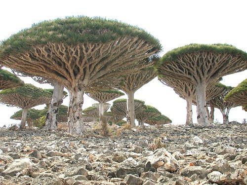 Socotra-Image-4.jpg