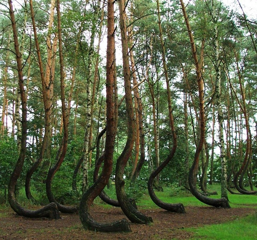 The-Crooked-Forest-Image-1.jpg