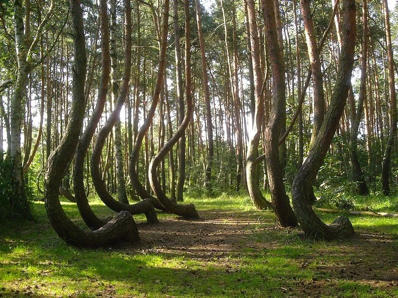 The-Crooked-Forest-Image-2.jpg