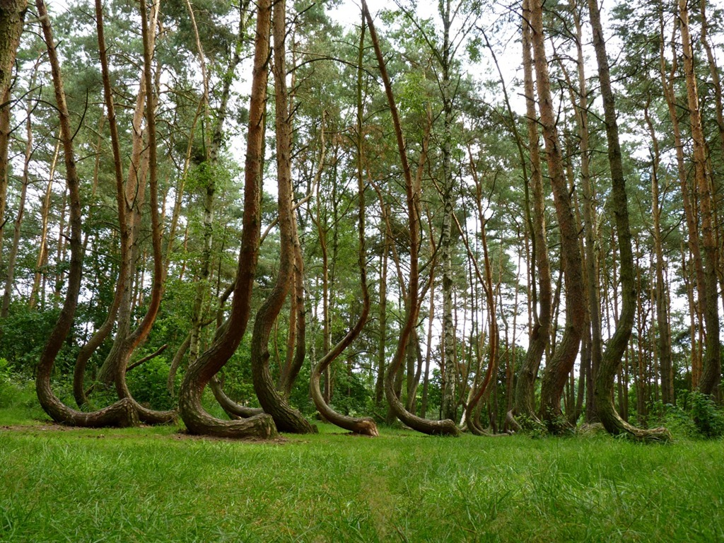 The-Crooked-Forest-Image-3.jpg