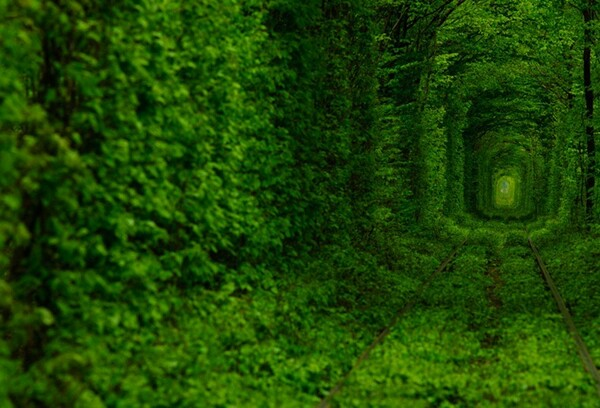Tunnel Of Love Image 2