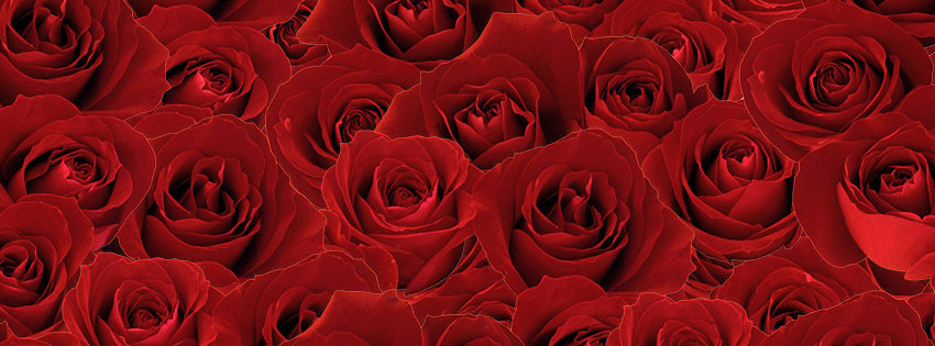 Roses-fb-cover-photo